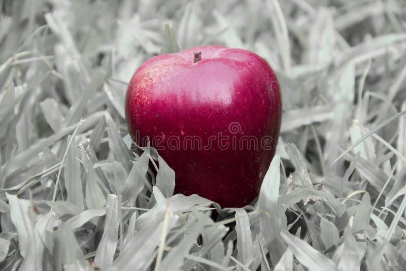 Jeden czerwony jabłko na czarny i biały trawy tle zdjęcia royalty free