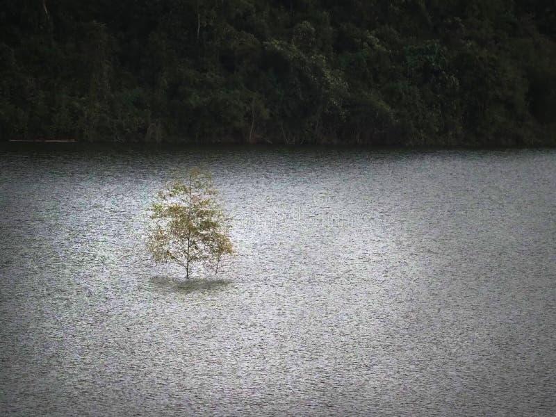 Jeden drzewo na jeziorze zdjęcie royalty free