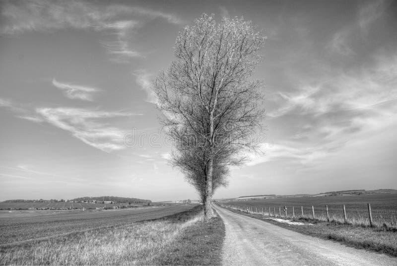Jeden drzewo w czarny i biały zdjęcie royalty free