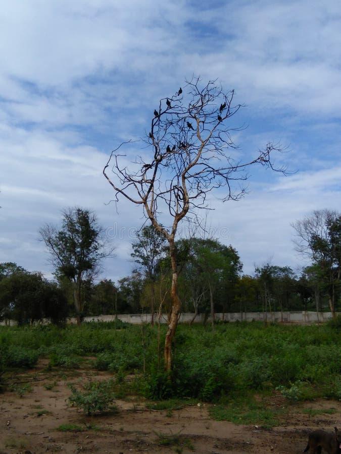Jeden drzewo wiele ptaki zdjęcie royalty free
