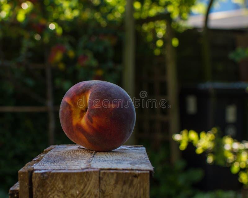 Jeden duża cała dojrzała czerwona brzoskwinia na pudełku w ogródzie obraz stock