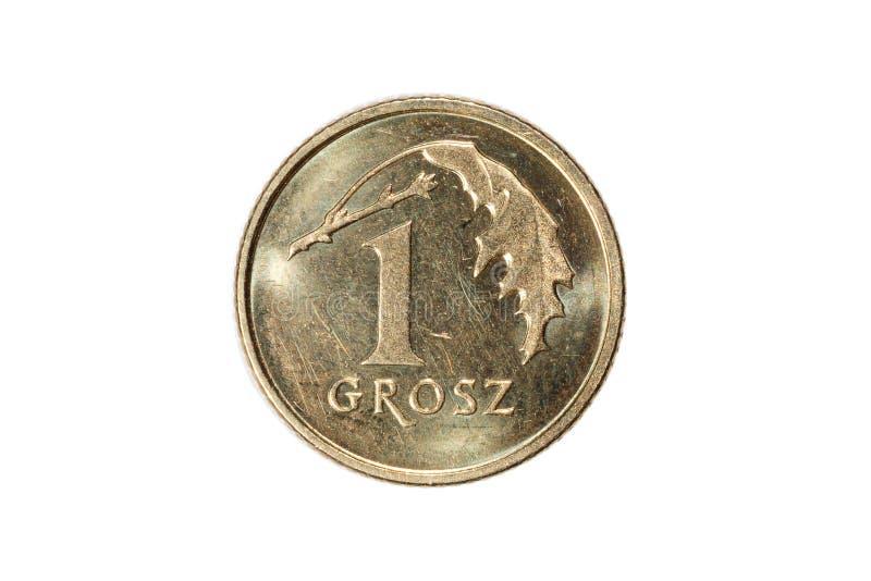 Jeden groszy polerujący złoty Waluta Polska Makro- fotografia moneta Polska przedstawia połysk groszy monetę fotografia royalty free