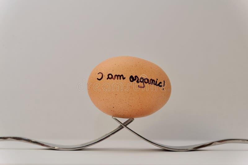 Jeden jajko i dwa rozwidlenia zdjęcia royalty free