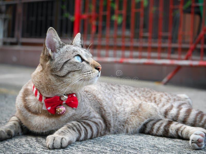 Jeden kiciunia kota przyglądający up obrazy royalty free