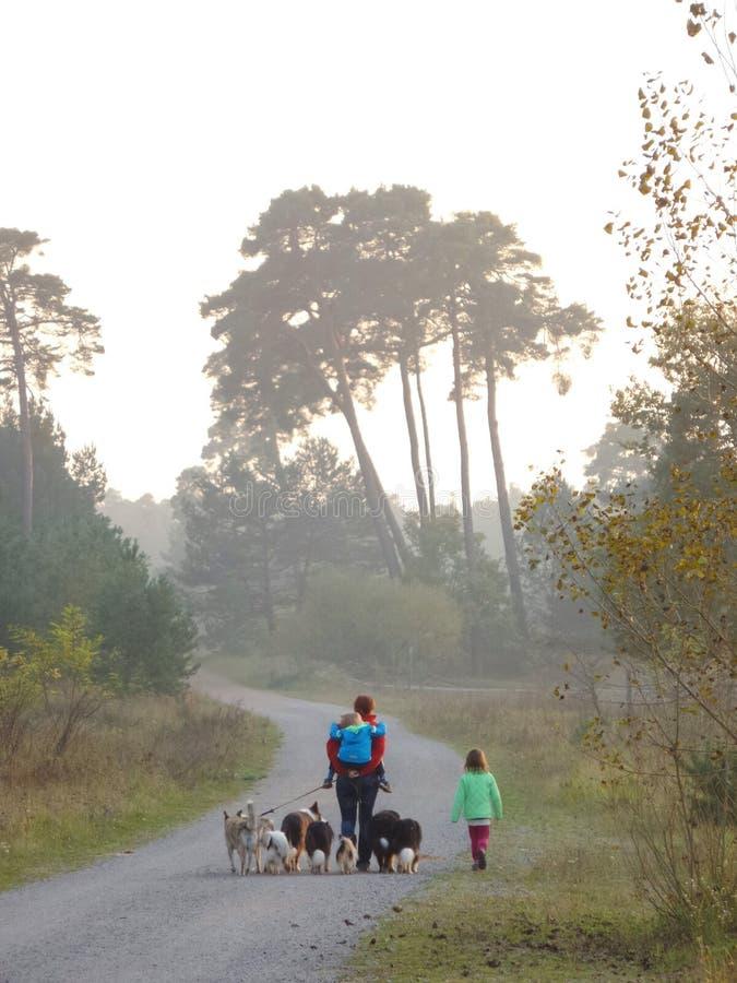 Jeden kobieta, dwa dziecka i 8 psów, zdjęcie stock