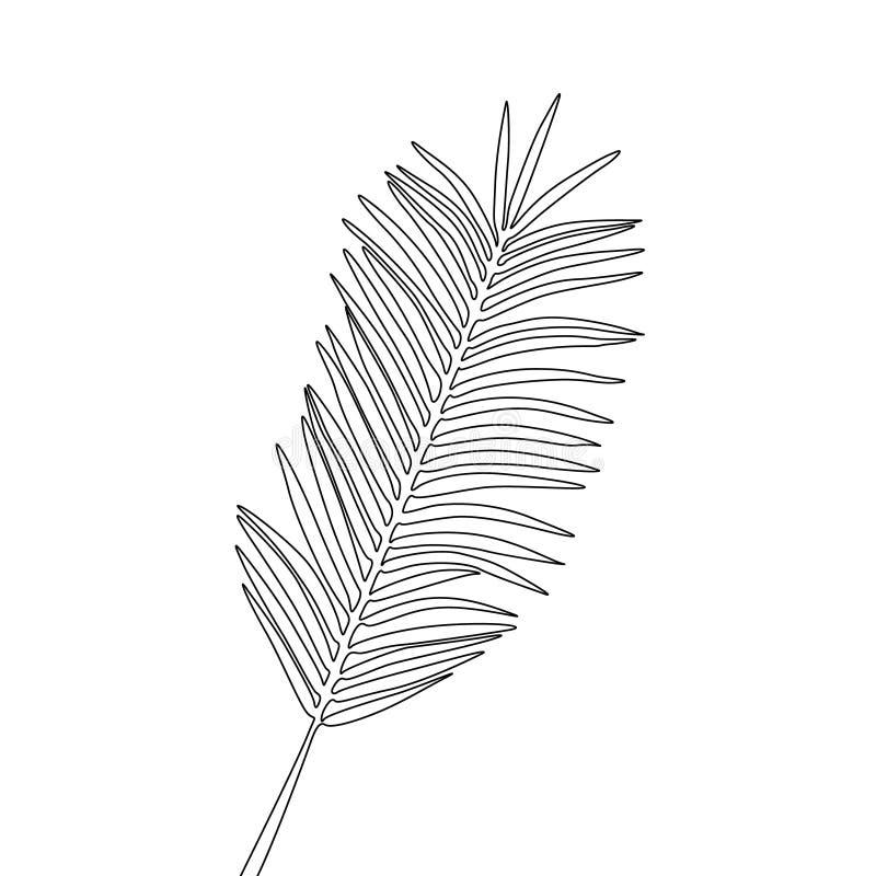 Jeden kreskowego rysunku areki palmowy li?? Ci?g?ej linii egzotyczna tropikalna ro?lina royalty ilustracja