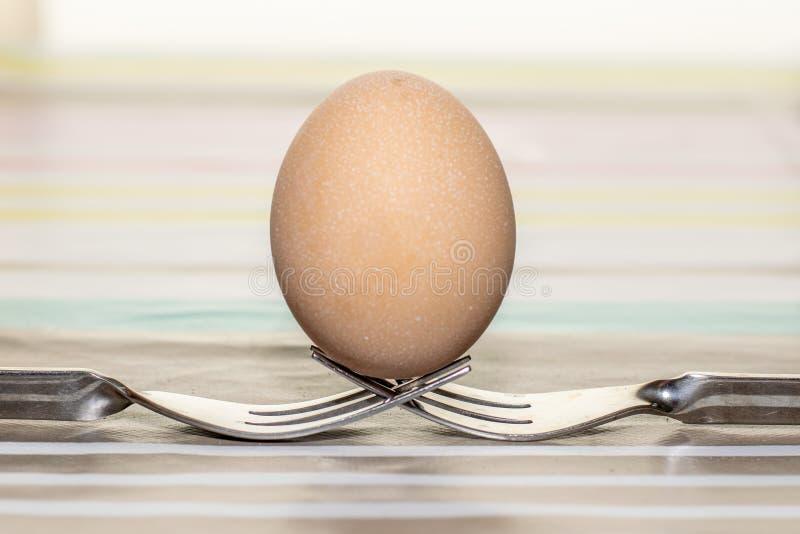 Jeden kurczaka jajko na górze dwa kruszcowych rozwidleń zdjęcia royalty free
