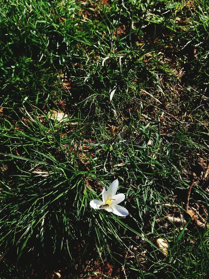 Jeden kwiat i zwierzę zdjęcie stock