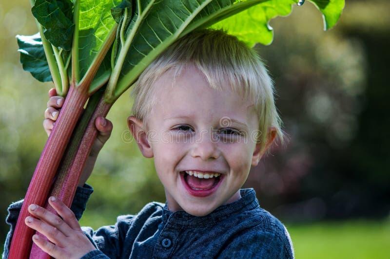 Jeden mała preschool chłopiec który żniwa jeden wielką wiązkę rabarbary w ogródzie na pogodnym wiosna dniu obrazy stock