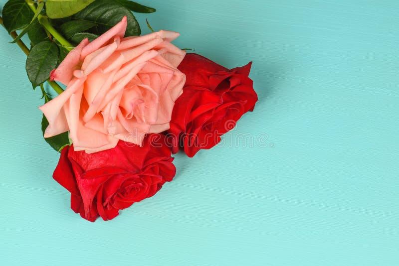 Jeden menchia i dwa czerwonej róży na błękitnym tła zakończeniu fotografia stock