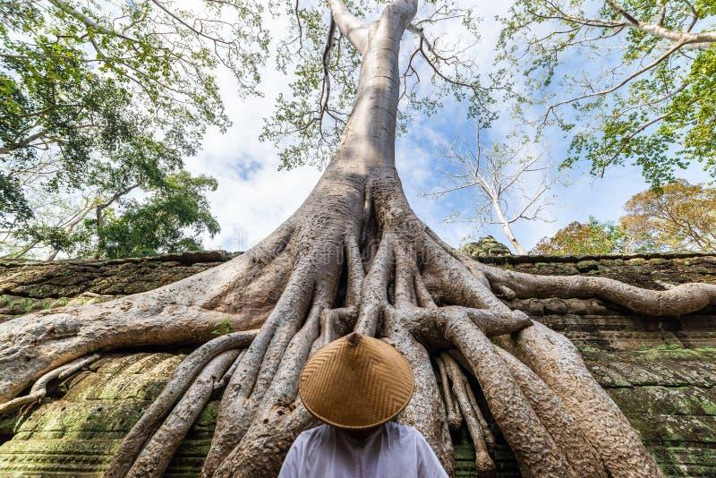 Jeden osoba patrzeje Ta Prohm dżungli sławnego drzewa zakorzenia obejmować Angkor świątynie, zemsta natura przeciw ludzkim budynk zdjęcia stock