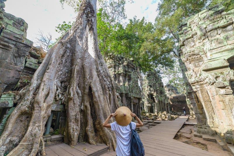 Jeden osoba patrzeje Ta Prohm dżungli sławnego drzewa zakorzenia obejmować Angkor świątynie, zemsta natura przeciw ludzkim budynk zdjęcie stock