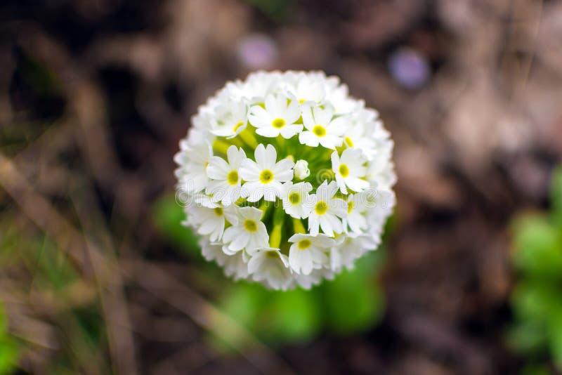 Jeden piękni ogródów kwiaty fotografia royalty free
