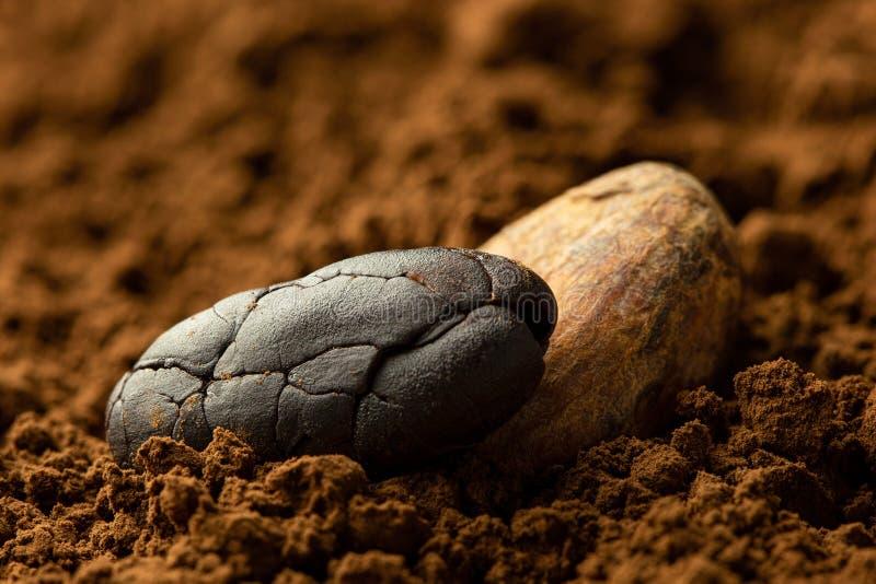 Jeden piec unpeeled i jeden strugał kakaowe fasole siedzi w kakaowym proszku zamazuj?cy t?o obrazy stock