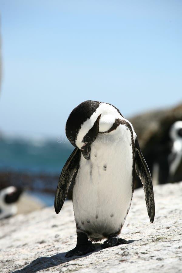 jeden pingwin fotografia stock