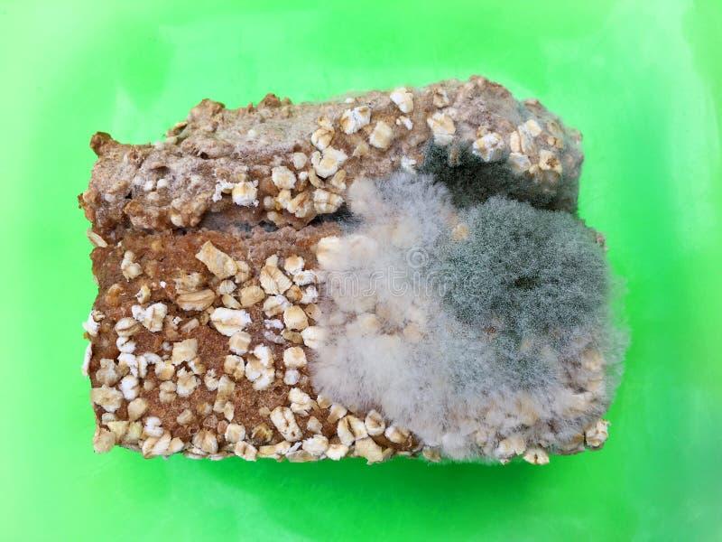 Jeden plasterek przerastający z karmowymi foremka grzybami na wholemeal chleb zielenieje talerza zdjęcia stock