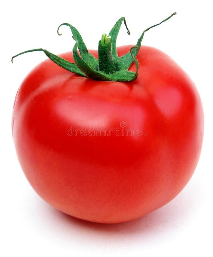 jeden pomidor zdjęcie stock