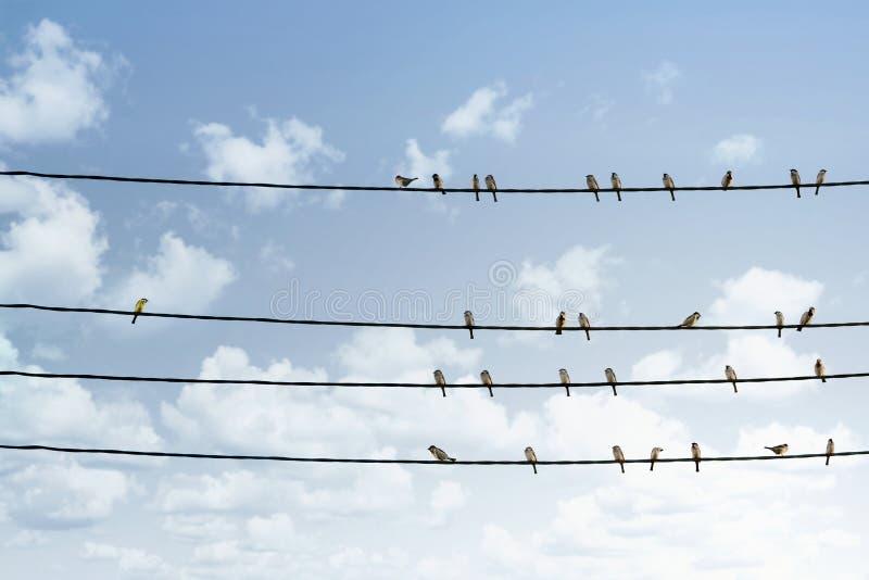 Jeden ptasia pozycja od za tłumu inni ptaki na linii energetycznej zdjęcia royalty free