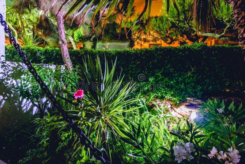 Jeden różowy wzrastał w noc ogródzie z zielonymi roślinami obraz royalty free