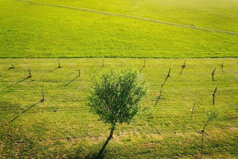 Jeden r owocowy drzewo otaczający młodymi małymi drzewami w pięknym zielonym sadzie, pogodny letni dzień, zdrowy styl życia fotografia royalty free