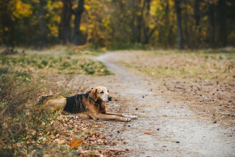 Jeden uliczny pies leży na trawie w zimny jesienny dzień zdjęcia royalty free