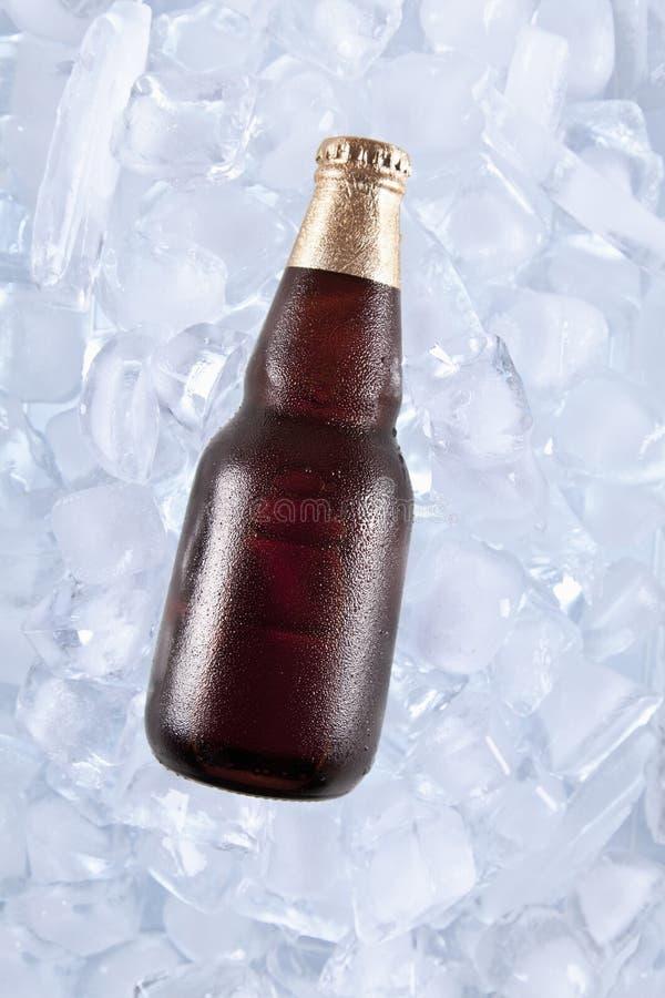 Jeden zimny piwo zdjęcie royalty free