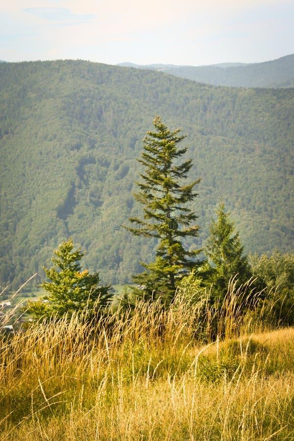 Download Jedlina w górach zdjęcie stock. Obraz złożonej z skłon - 28957458