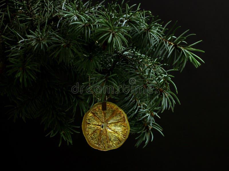 Jedlinowa gałąź odizolowywająca z suchym plasterkiem pomarańcze obrazy stock