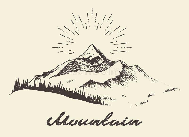 Jedlinowa lasowa góra rysująca wektorowa ilustracja ilustracji
