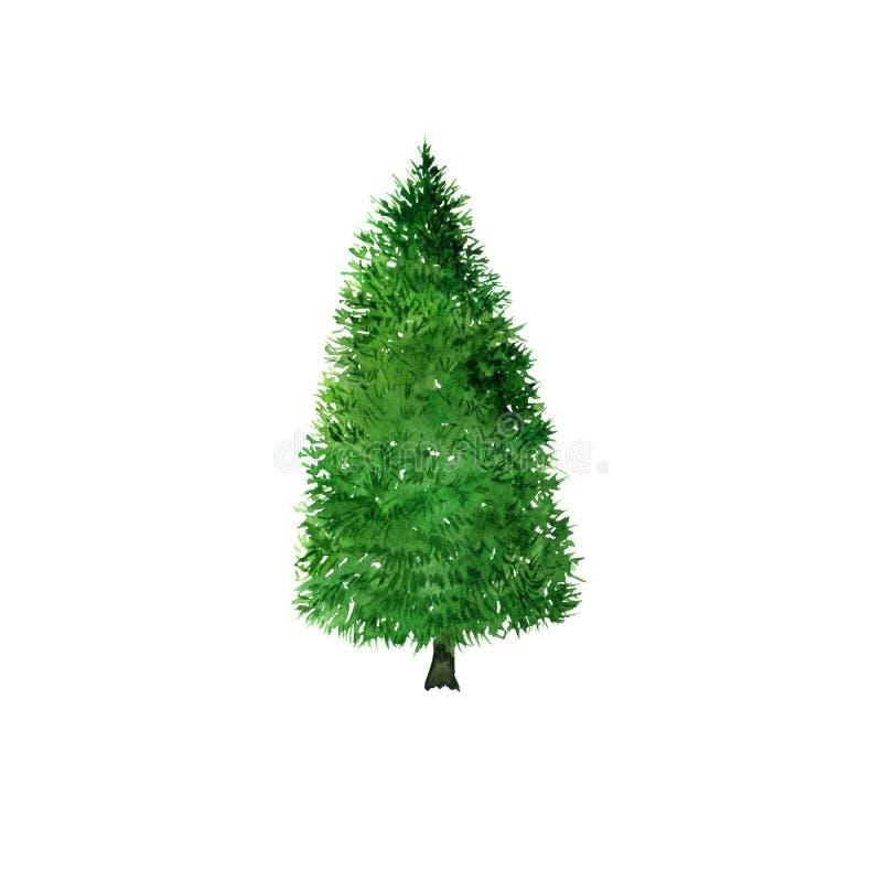 Jedlinowego drzewa rysunek akwarelą ilustracja wektor