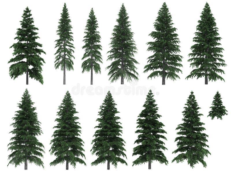 jedlinowi drzewa royalty ilustracja