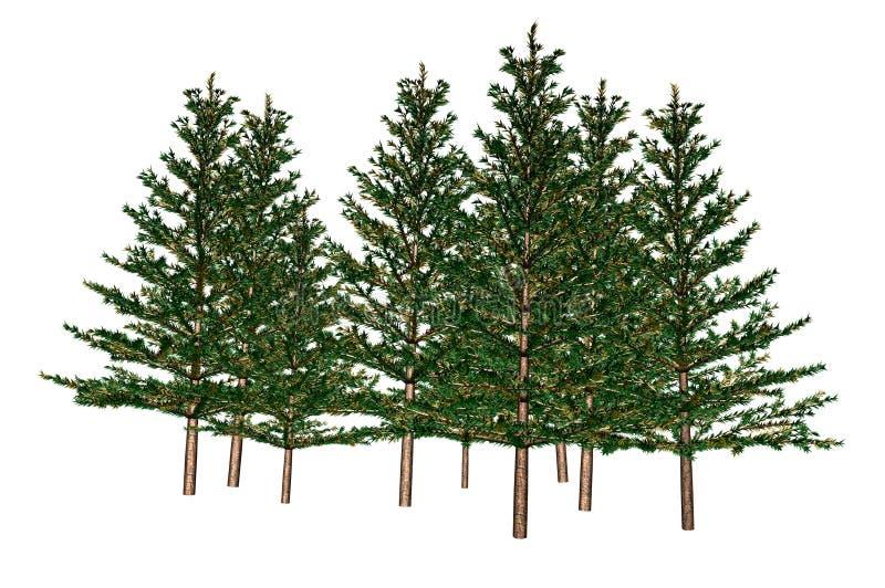 jedlinowi drzewa ilustracji
