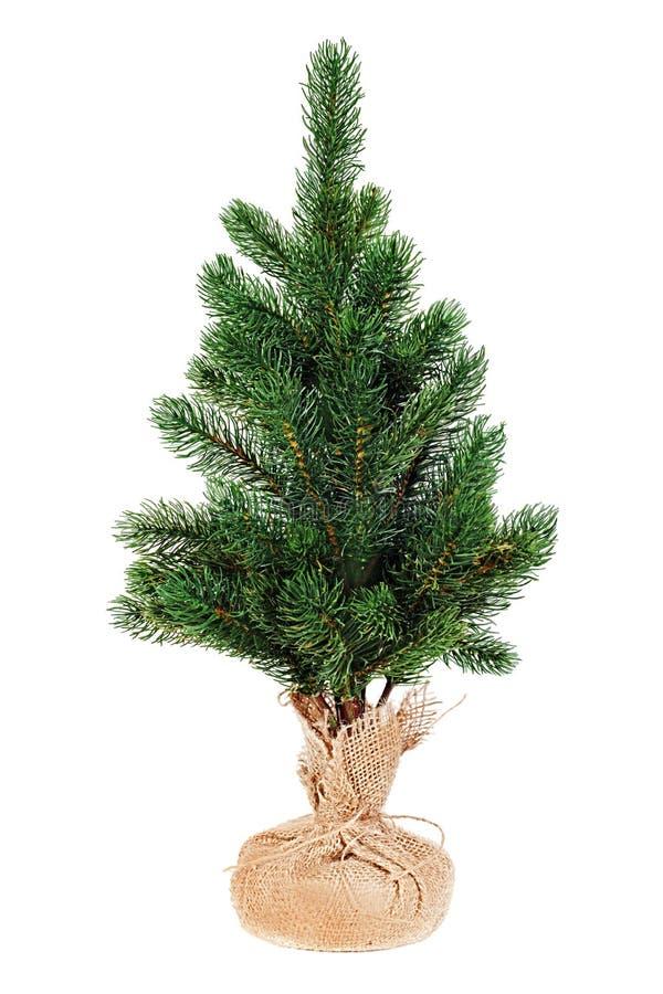 Jedlinowy drzewo dla bożych narodzeń odizolowywających na białym tle. fotografia stock