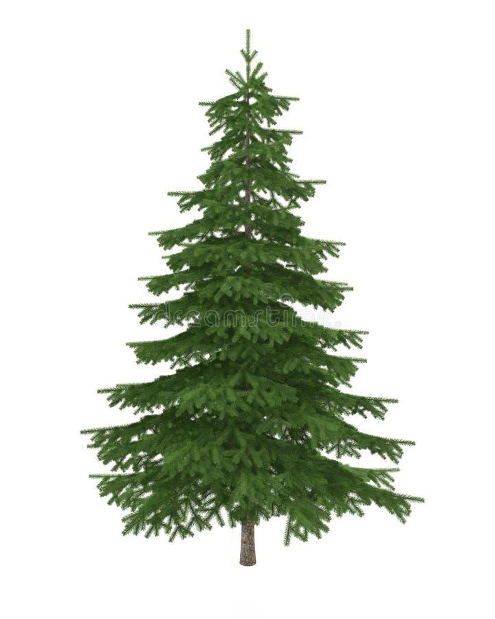 Jedlinowy drzewo odizolowywający na biały tle obraz stock