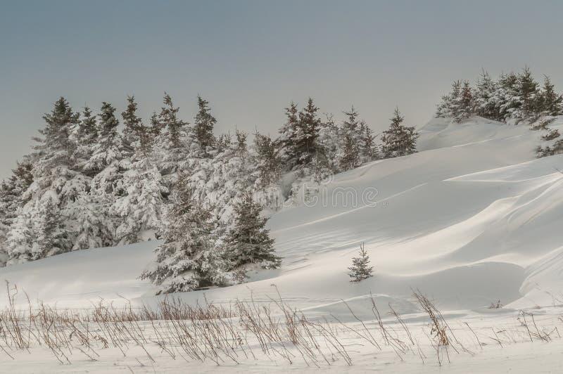 Jedlinowy zima krajobraz obraz royalty free