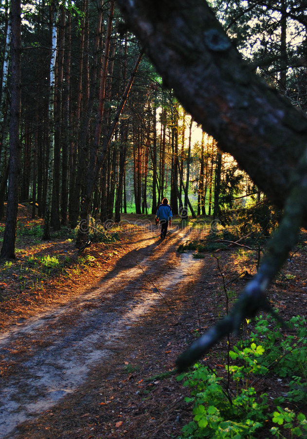 jedna ścieżka leśna obraz stock
