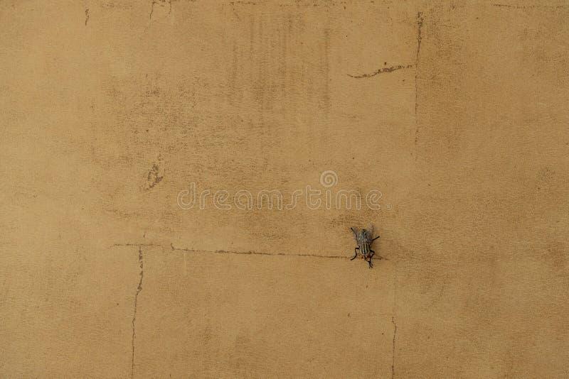 Jedna mucha na pękniętej ścianie betonowej zdjęcie stock