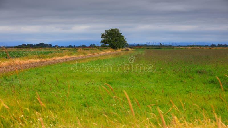Jedno drzewo na farmie zdjęcie royalty free