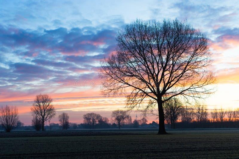 Jedno drzewo przed chmurnym niebem zdjęcie royalty free