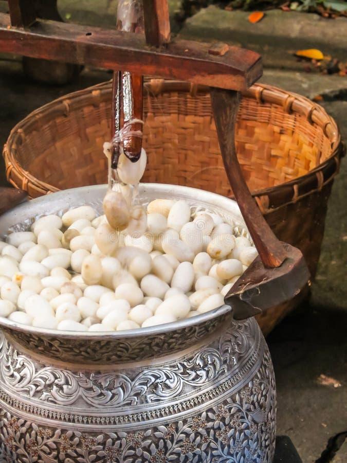 Jedwabników kokony w jedwabniczym procesie produkcji zdjęcie royalty free