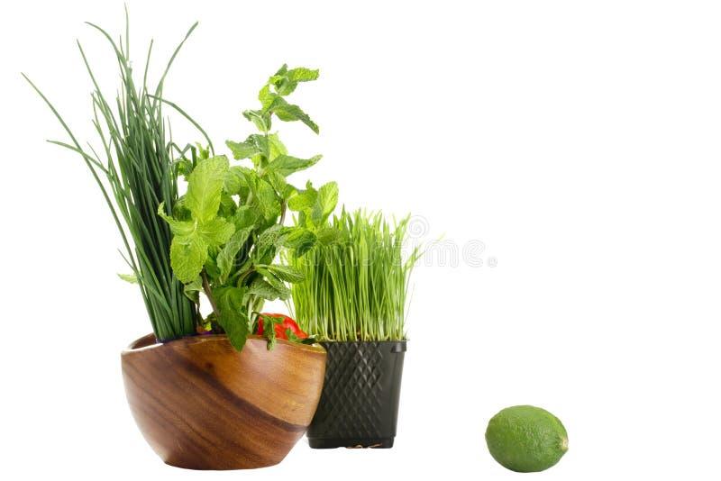 jedzenia zdrowy zielony obraz royalty free