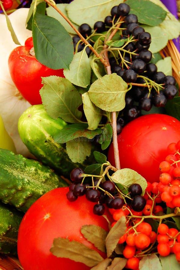 jedzenie. zdjęcia royalty free