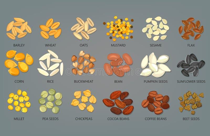 Jedzenie adra, ziarna, fasole kawa i kakao i, ilustracja wektor