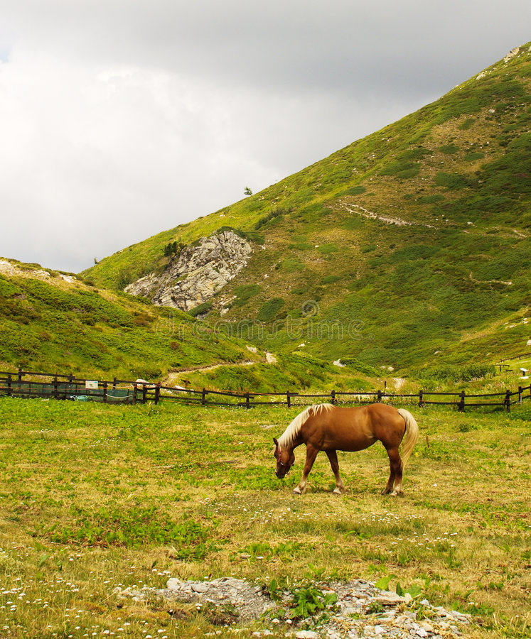 jedzenie konia łąki fotografia stock