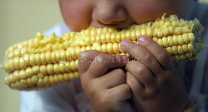 jedzenie kukurydziany zdjęcie stock