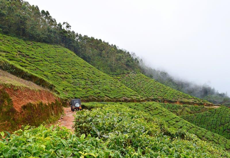 Jeep Safari na propriedade do chá de Kolukkumalai - plantações de chá sobre montes fotos de stock royalty free