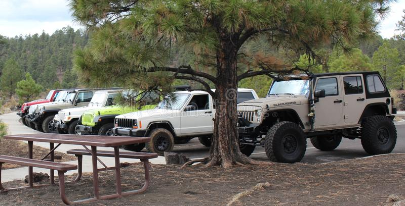 A Gaggle of Jeeps In The Forest royalty free stock images