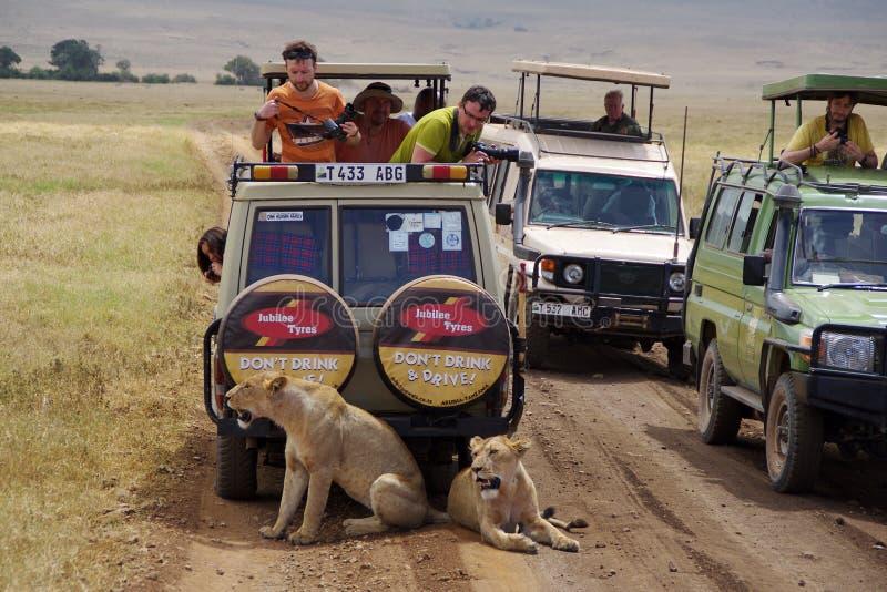 Jeepsafari w Ngorongoro 1 zdjęcia royalty free