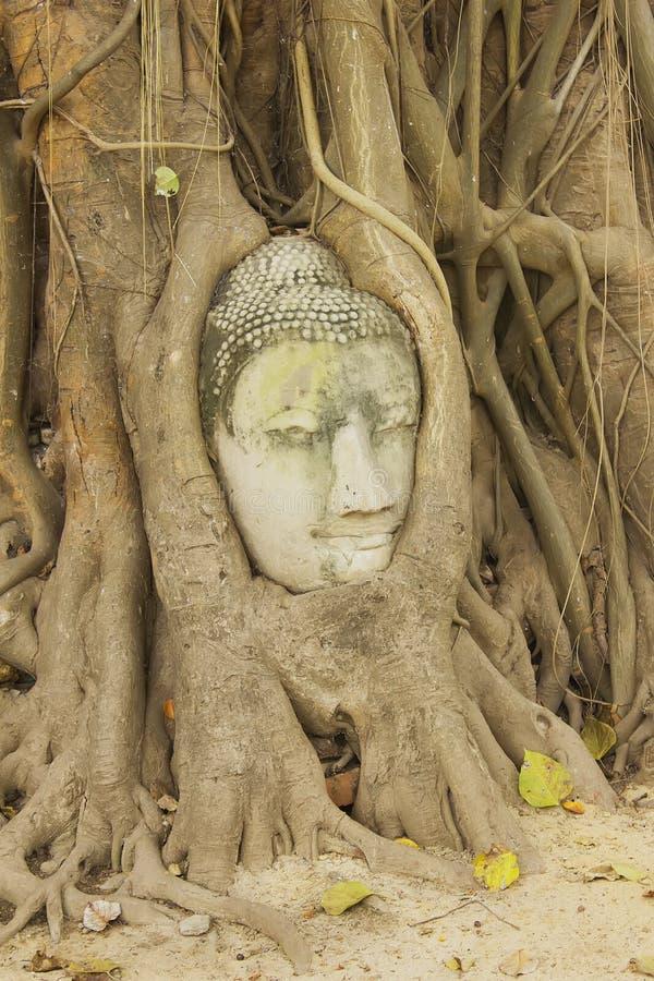 Jefe de la estatua en las raíces del árbol, Ayutthaya, Tailandia de Buda fotos de archivo