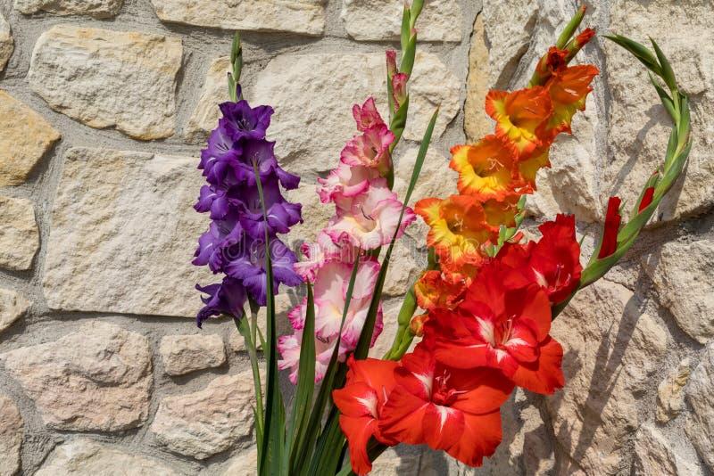 Jefe de la flor del gladiolo imagenes de archivo